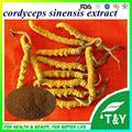 100% Natural 30% Polysaccharides Cordyceps Sinensis Extract 500g/lot 20:1