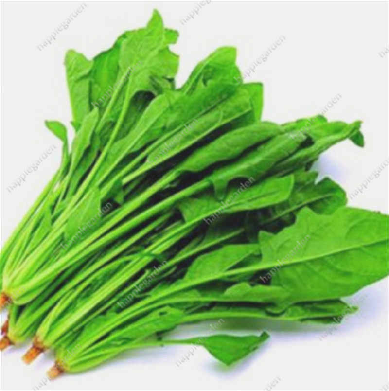 300 Pcs Heirloom Green Spinach Green Vegetable Spinach Salad Leaves Good Taste Non-GMO Home Garden Plants for Flower Pot Planter