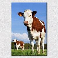 Moderne canvas prints uit's van mooiste koe van australische boerderijen animal print voor babykamer gratis verzending