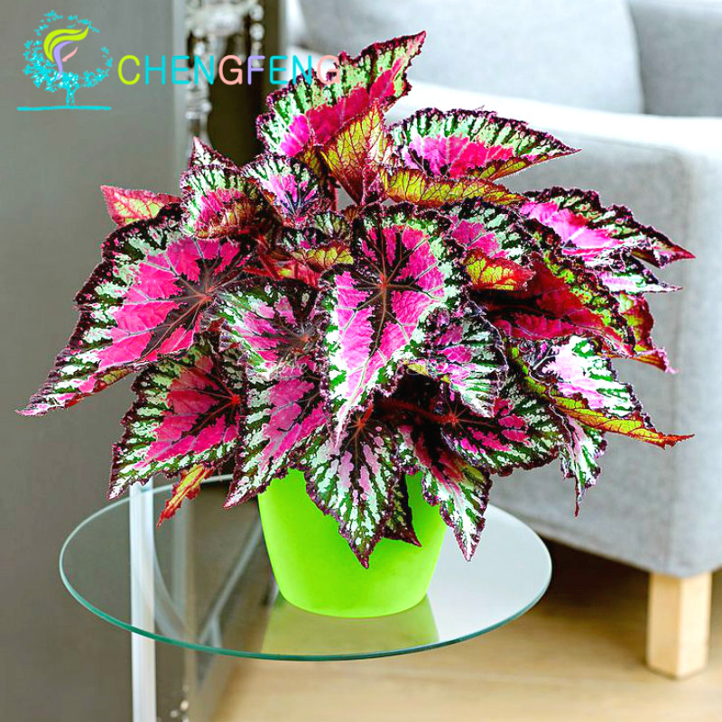 New Hot 100pcs Rainbow Mix Coleus Seeds 15 Kinds Of Flower Grass Seed Home Garden Bonsai Tree Decor Balcony