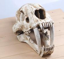 wholesale 35cm white resin 1:1 American Saber-toothed Tiger Skull Model head mannequin, reference skull model, artistic  M01013 human skull model 1 1 skull model resin skull model art skull model