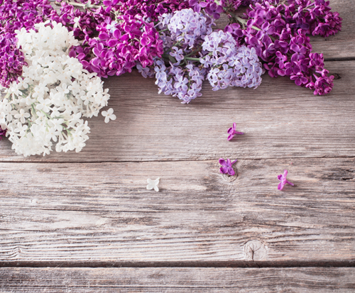 Purple And White Flower Plank Wood Floor Printed Photo