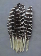 New!Hot!100Pcs/lot!5-10cm long MINIATURE WILD TURKEY WING FEATHERS,Natural Wild Turkey Small Quill Feathers freeshipping