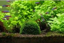 Mini Moss Ball Aquarium Decoration Plants Natural Filter for Fish Tank Shrimp Mineral Balls Ornaments DIY Aquatic Plant New live цена и фото