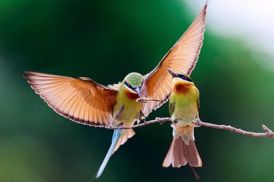 Скачать Обои Птицы