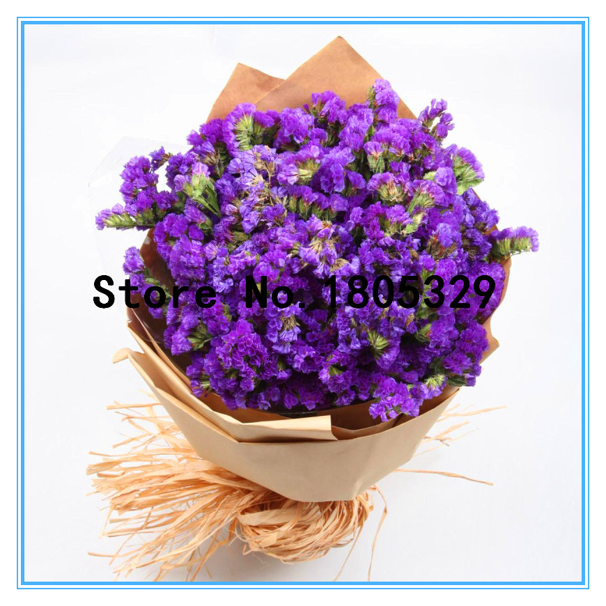 100% True Seed Magnificent  Myosotis Sylvatica Seeds Home Garden Flowers Potted Bonsai 100pcs Do Not Forget Me