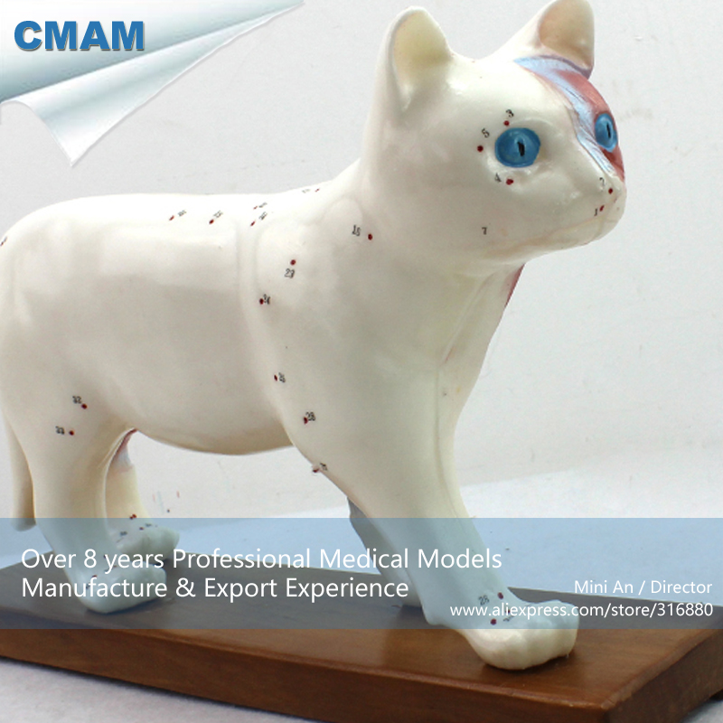 12004 CMAM-A04 Anatomy Animal Cat Acupuncture Model, Anatomy Models > Acupuncture Models dog acupuncture model animal acupuncture model