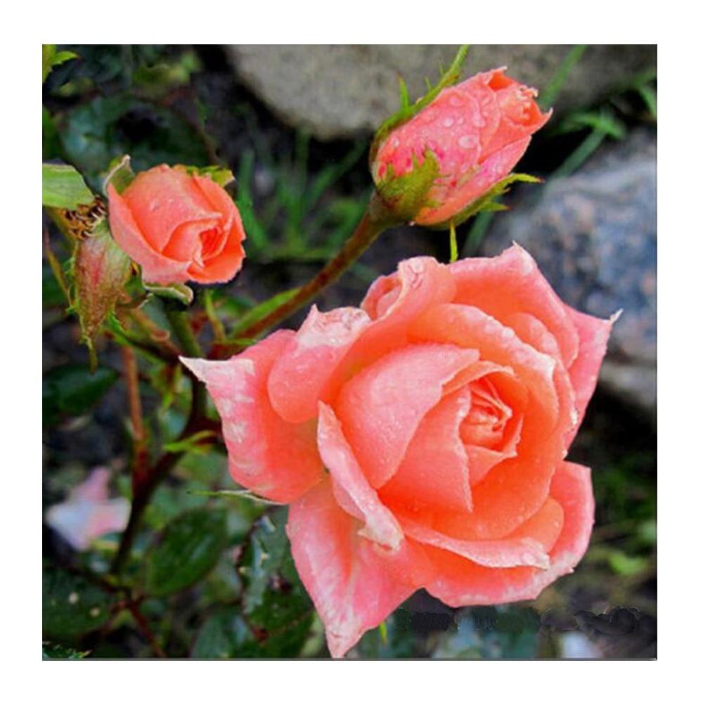 Flor roja Diy Diamante pintura flores Diamante completo bordado Rosa - Artes, artesanía y costura