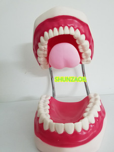 Image 5 - 6 kez plastik diş modeli diş manken insan hareketli dil ağız tıbbi frasaco diş