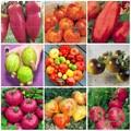 200 шт. растительное бонсай выращивания растений овощей бонсай томатной Семена карликового дерева для дома и сада - фото