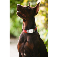 Electronic pet positioning collars, pet anti-lost tracker tracking, rechargeable pet tracker, free shipping