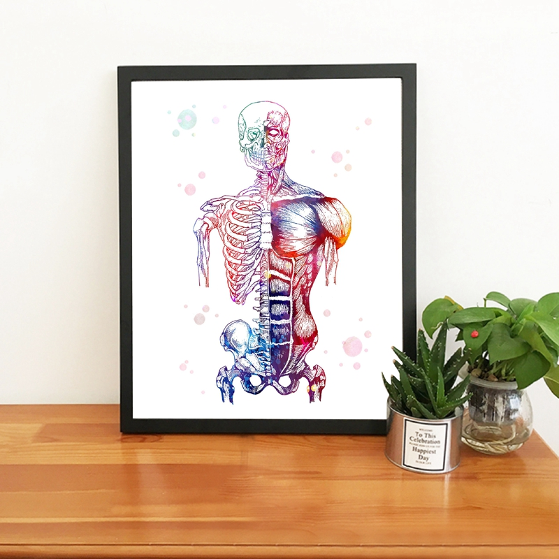 Watercolor Human Muscles Wall Art Prints