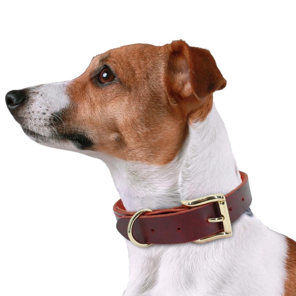 köpek tasması hep21