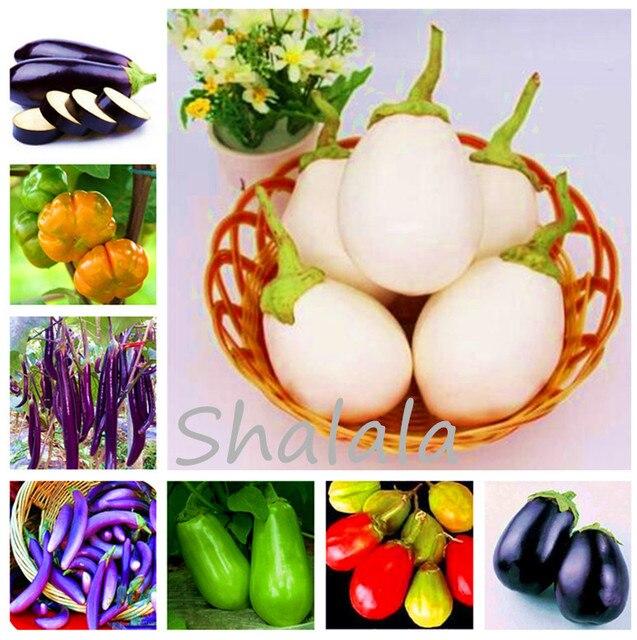 200 Pcs Mixed Eggplant plants,Giant Vegetable bonsai, DIY Potted Plant For Home Garden Non-GMO Vegetable decor garden las vegas