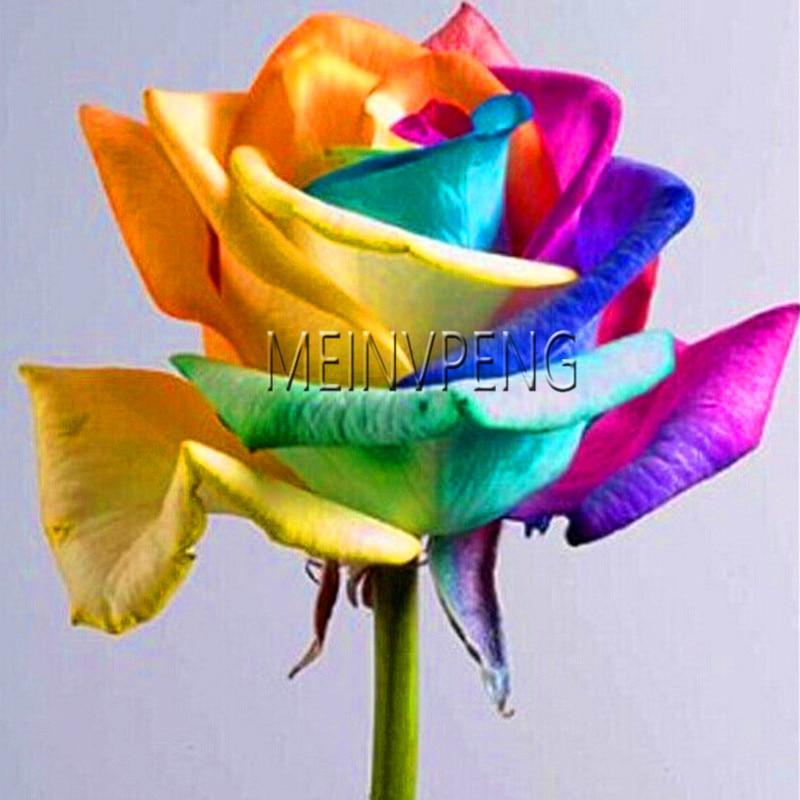 Best-Selling!100/bag Seeds Rare Holland Rainbow Rose,Flower Home Garden rare rainbow rose flower seeds Free shipping ,#MZ9JNY