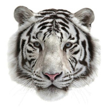White PVC Patch deal with it Clothes Tiger head Heat Transfer Printing T shirt Women iron on patches for clothing men Stickers