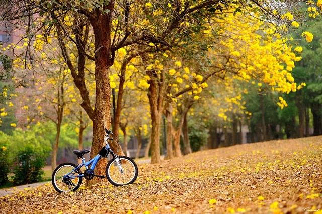Diy frame spring flowers yellow trees bike autumn fall mood bokeh diy frame spring flowers yellow trees bike autumn fall mood bokeh cloth silk art wall poster mightylinksfo