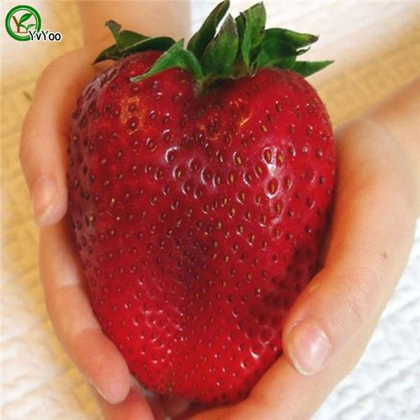 200pcs Giant Strawberry Bonsai Super Big And Red Strawberry Fruit Bonsai Delicious Bonsai Plants Gift For Garden Men Free Shippi
