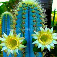 100pcs  cactus bonsai rare succulent suculentas plantas tree garden decoration flores kwiaty ogrodowe semillas planta