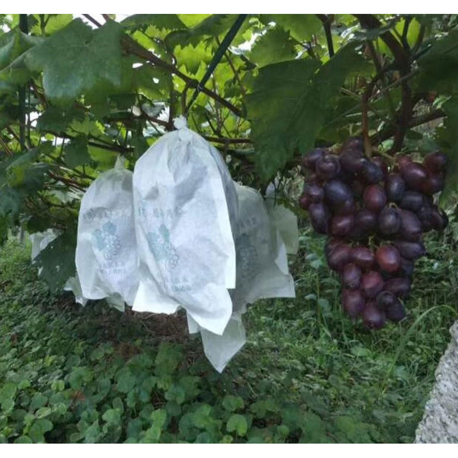 100Pcs Grape Protection Bag Anti Bird Moisture Insect Net