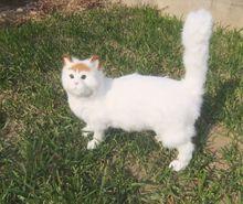 new simulation big cat toy polyethylene & furs yellow cat toy home decoration gift 32X13X38cm