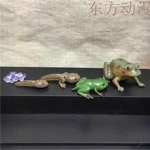 pvc figure Genuine simulation model toy frog life cycle 5PCS/ set