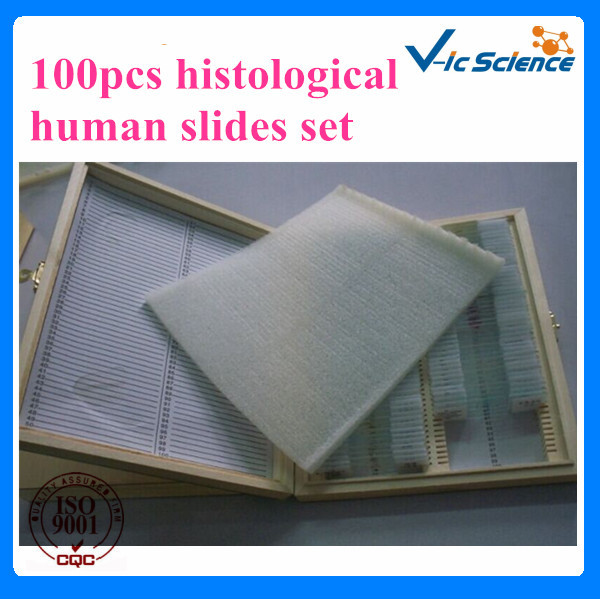 100%Factory 100pcs histological human slides set 100