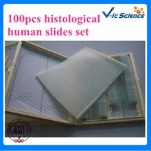 100%Factory 100pcs histological human slides set