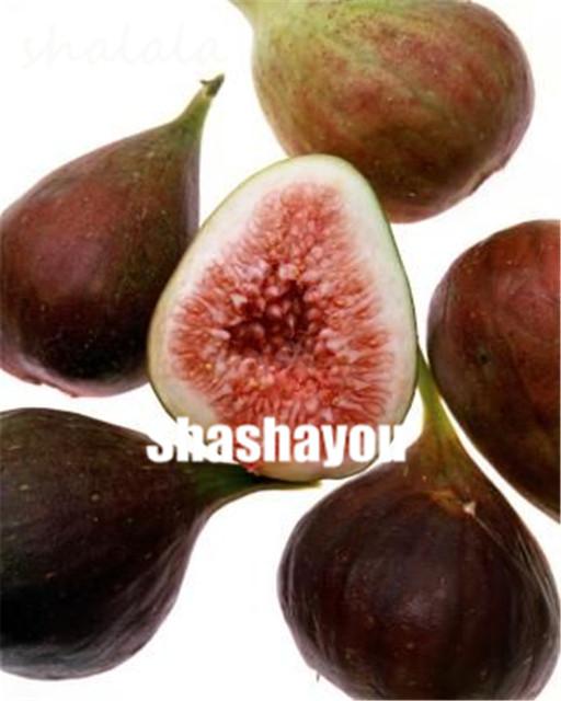 Free Shipping 100 pcs Figs bonsai,Edible Fruit Bonsai Tree plants,Edible food balcony potted plants for home garden Easy to Grow