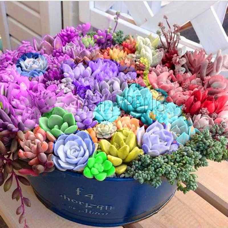500 шт смесь литопс бонсай живые камни цветок сочный кактус органическое растение для домашнего сада легко выращивать