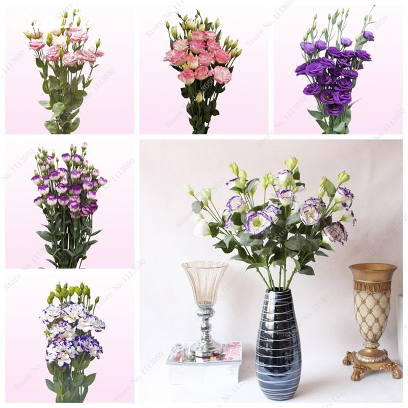 Sale! 100 Pcs Eustoma Seeds Perennial Flowering Plants Balcony Potted Flowers Seeds Indoor Bonsai Flower Seeds For Home Garden
