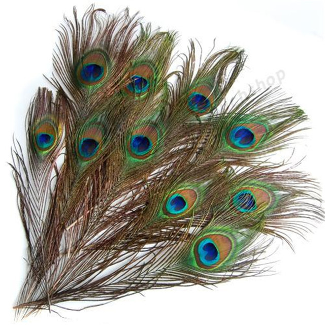 Buy 10pcs real natural peacock eye tail for Where can i buy peacock feathers craft store