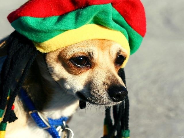 Rasta Dog Cute Funny Puppy Art Huge Canvas Print Poster TXHOME D3098 ...
