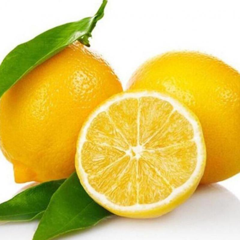 Popular exotic indoor plants buy cheap exotic indoor for Buy lemon seeds online