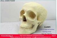 Учебная физика пластическая хирургическая ортопедическая хирургическая демонстрационная модель череп Неврология черепичная черепица мо
