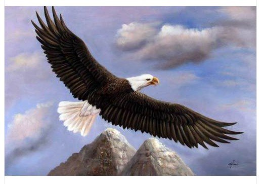 American Bald Eagle Mountain Bird Flying Oil Painting in