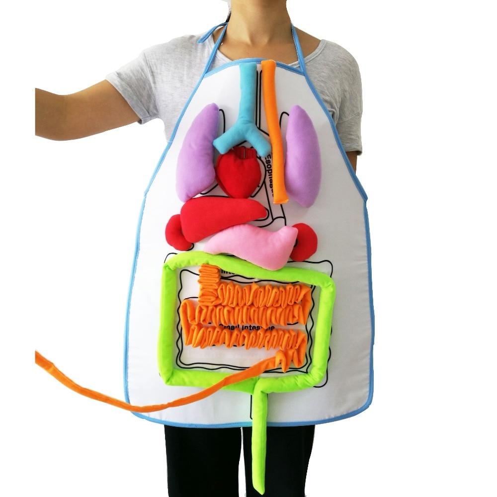 Montessori Para Todos Órganos Cuerpo Humano – Kadhim Alsahir
