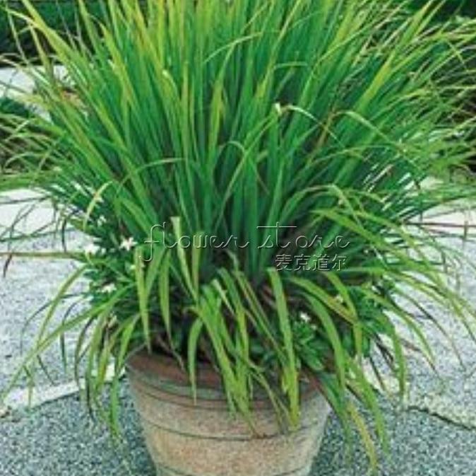 Popular Edible Herbs-Buy Cheap Edible Herbs lots from ...