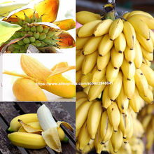 2019 New 100pcs sementes` plantas  Banana Bonsai Rare Hainan Tree Delicious Fruit Potted Plant For Home & Garden