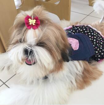 одежда для собак чихуахуа купить в Китае