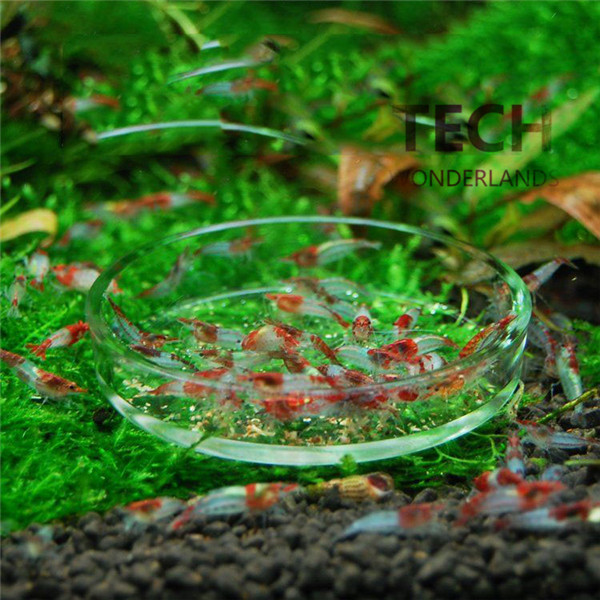 Online kaufen gro handel glas garnelen aus china glas for Aquarium versand