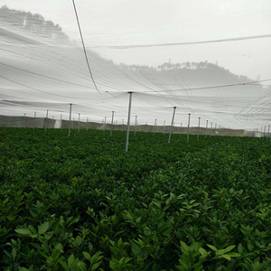 Image 5 - 20Mesh 2mx1m Anti bird Insect Mesh Netting Plants Vegetable Fruit Nylon Protection Cover Tree Greenhouse Pest Control Supplies