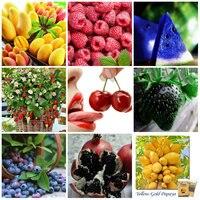 9 Kinds Delicious Fruit Seeds For Home Garden Planttin Bonsai Plants For Home Garden