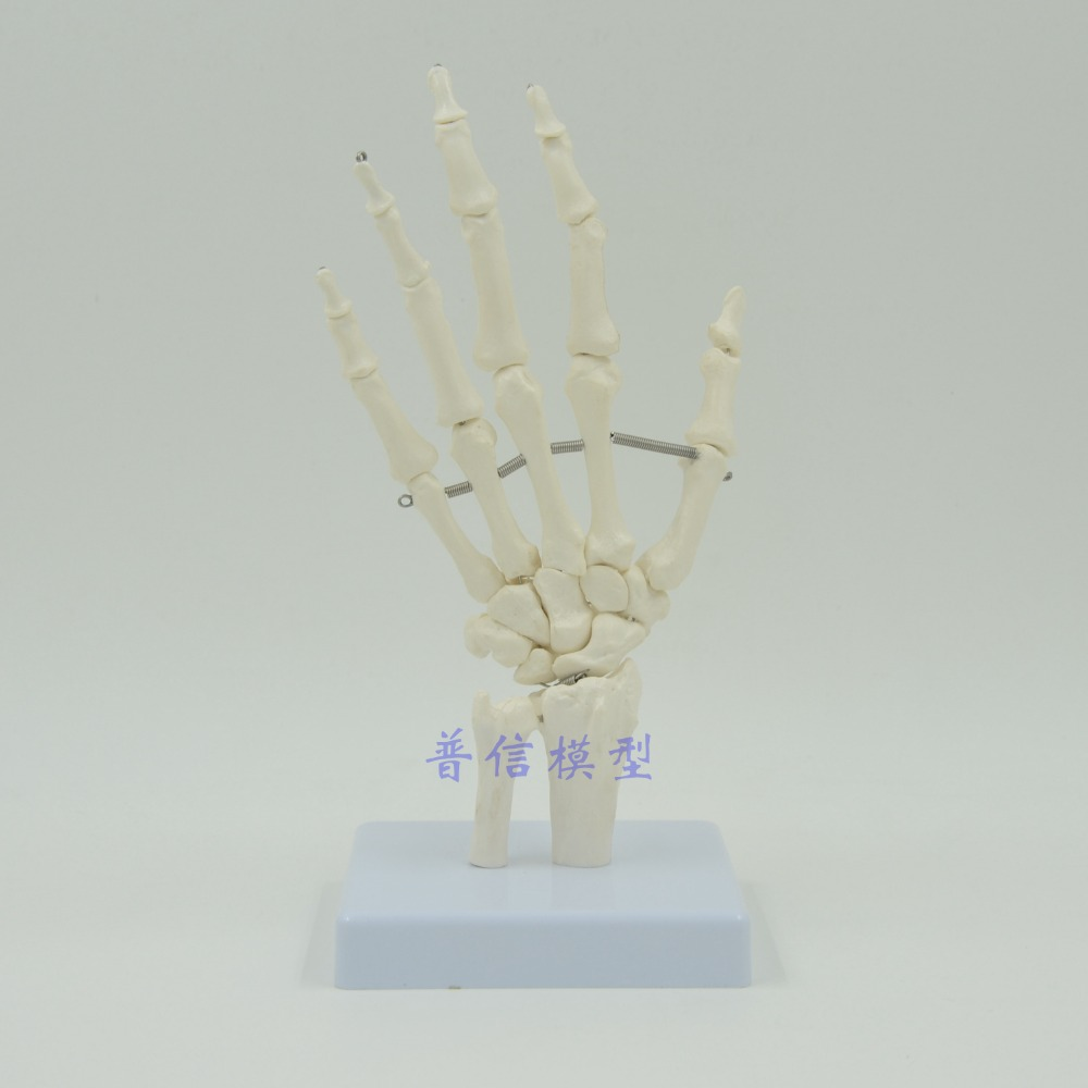 DongYun brand Human hand joint model hand skeleton model Medical Science teaching supplies