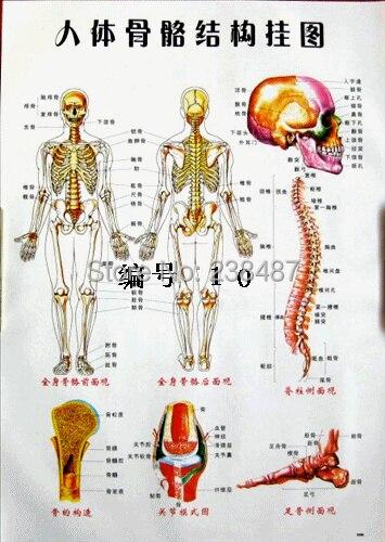 Körper akupunkturpunkte grafik/menschliche meridian karte ...
