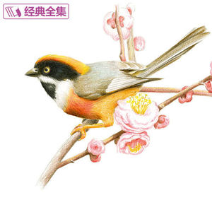 Image 3 - Colored pencil flowers and birds Drawing tutorial art book Really hand painted flowers and plants picture album Painting Book