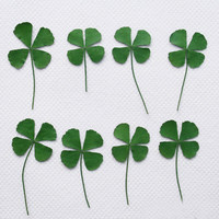 Medium Green Both Sides Clover Dried Pressed Crafts Leaves For Epoxy dried flowers phone case DIY Free shipment 1000pcs