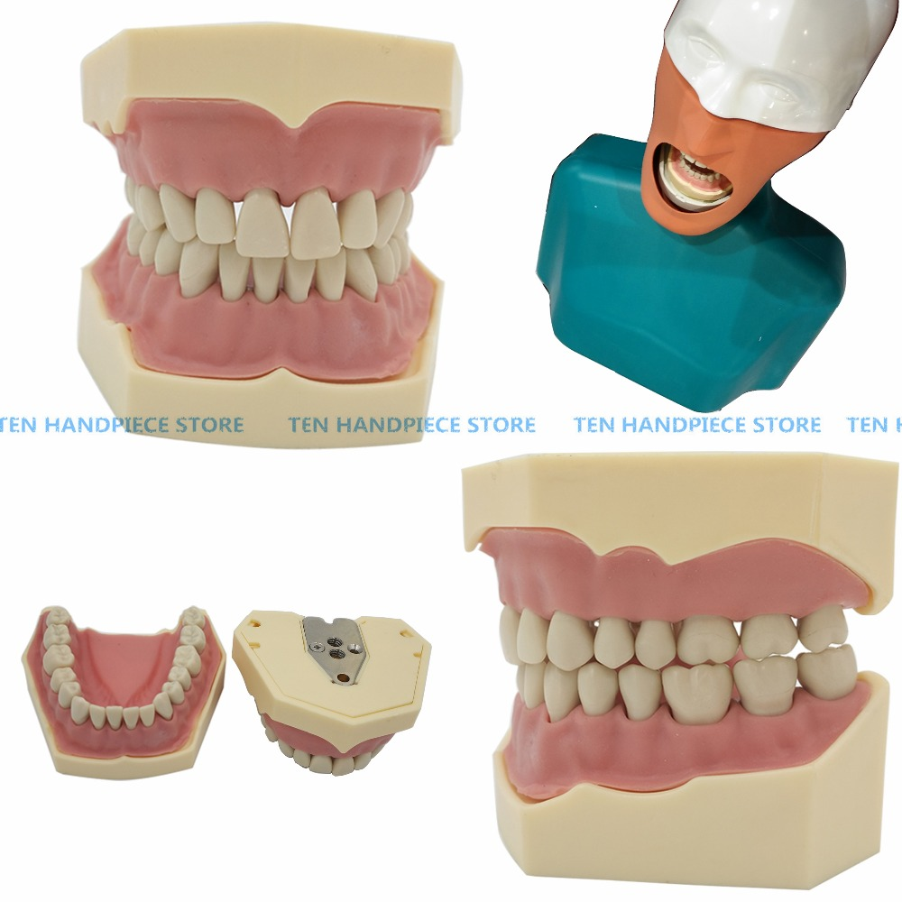 2018 Dental Soft Gum Teeth Model Removable 28pc/32pc Teeth NISSIN 200 KAVO head model Compatible dentist teaching learning free shipping good quality dental soft gum teeth model with tougnetypodont w 32 removable teeth nissin 200 compatible