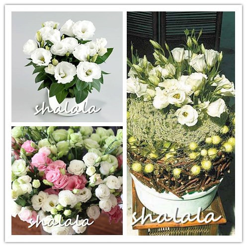Garden Supplies 100 Pcs Bonsai Green Eustoma Flower Beautiful Mixed Color Lisianthus Potted Plants Flowers For Home Garden Planting