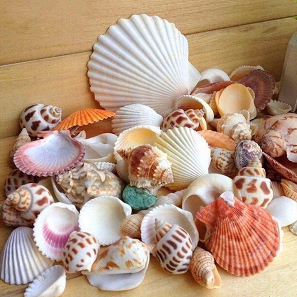 100G Beach Seashell Mediterranean Style DIY Fashion Mix Sea Shells Natural Crafts For Aquarium Fish Tank Decor  Sea Conch